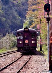 わたらせ渓谷鐵道・春(2)