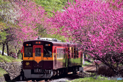 わたらせ渓谷鐵道・春(1)