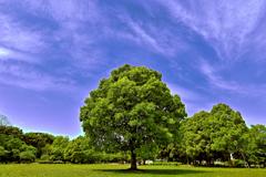気になる樹