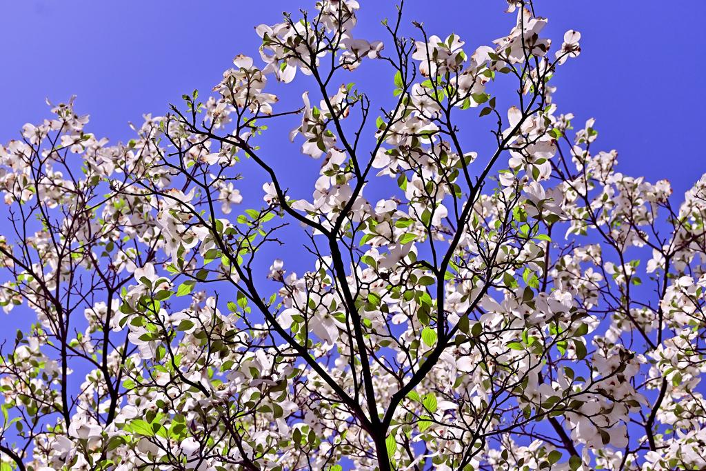 清らかな春
