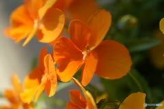 春を彩る草花