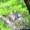 新緑の季節と野鳥達