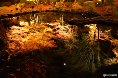 ライトアップの水鏡
