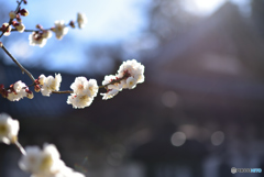 射し込む春