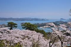 松島 春の観光