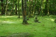 奈良・苔の庭