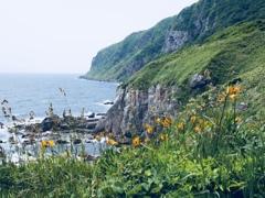 立待岬に咲く花