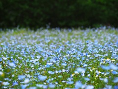 水色の絨毯
