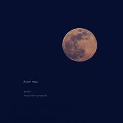 flower Moon (花月) 202005071