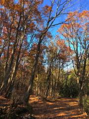 森の分岐路