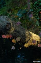 【身近な自然】・秋色に染まって・・森の輝き!