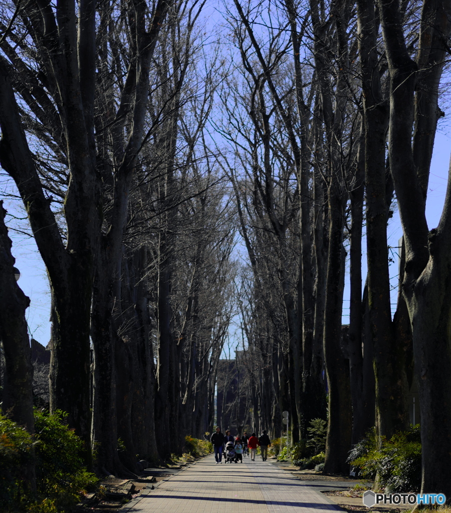 【街の情景】・みんなの散歩道・・吉祥寺(成蹊大学界隈)・・!