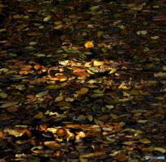 【身近な自然】・水面の紅葉・・森の輝き ②!