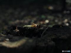【身近な自然】・秋色の木漏れ日・・森の輝き!