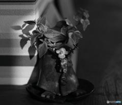【身近な自然】・小さいお花にも・・!