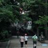 【街の情景】・梅雨空の合間に・・井の頭公園にて!