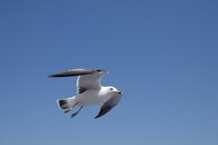 青空を翔ける