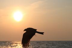 江ノ島の夕陽とトンビ