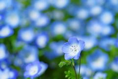 Blue&White