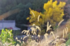 里の秋風景-3