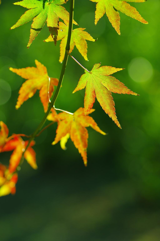 秋光の中で