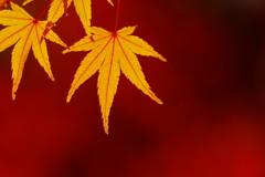 燃える季節