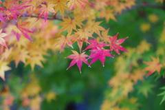 染まり行く秋