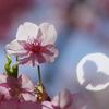 春の影遊び