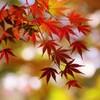 秋を惜しんで