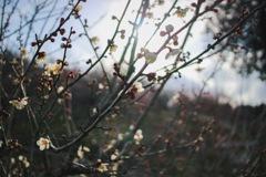 春の訪れ その2