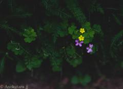 花の意味するところ