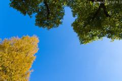 秋の勢力図