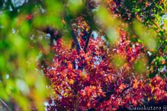 うつろふ葉