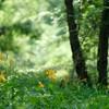 ムサシノキスゲの森