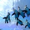 夏空とペンギン