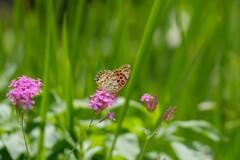 幸せの蝶々さん♡