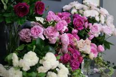 バラぐらし展の薔薇 4