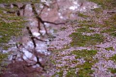 春を惜しむ
