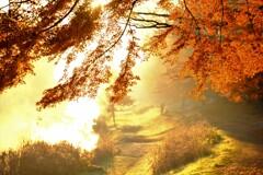 野川の紅葉