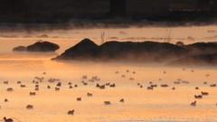 多摩川の川霧