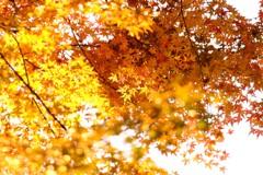 秋の色彩 Ⅲ