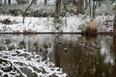 冬の池に集う