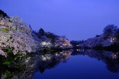 2018の井の頭公園夜桜