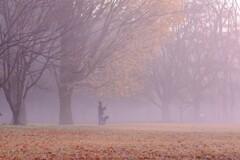 霧につつまれて