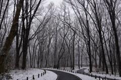雑木林の雪景色
