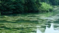 ツツイトモ揺れる井の頭池