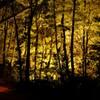 秋の夜散歩