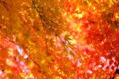 秋の色彩 Ⅰ