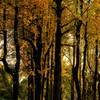 秋の日の午後