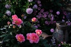 バラの小庭